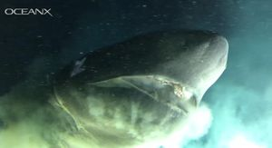 See a leviathan of a shark munch on a sub's speargun