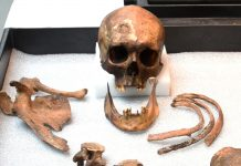 Strange Connecticut 'Vampire' Lastly Recognized 200 Years After Burial