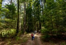 Safeguarding the magic of the redwoods