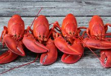 Why Do Lobsters Redden When They're Prepared?