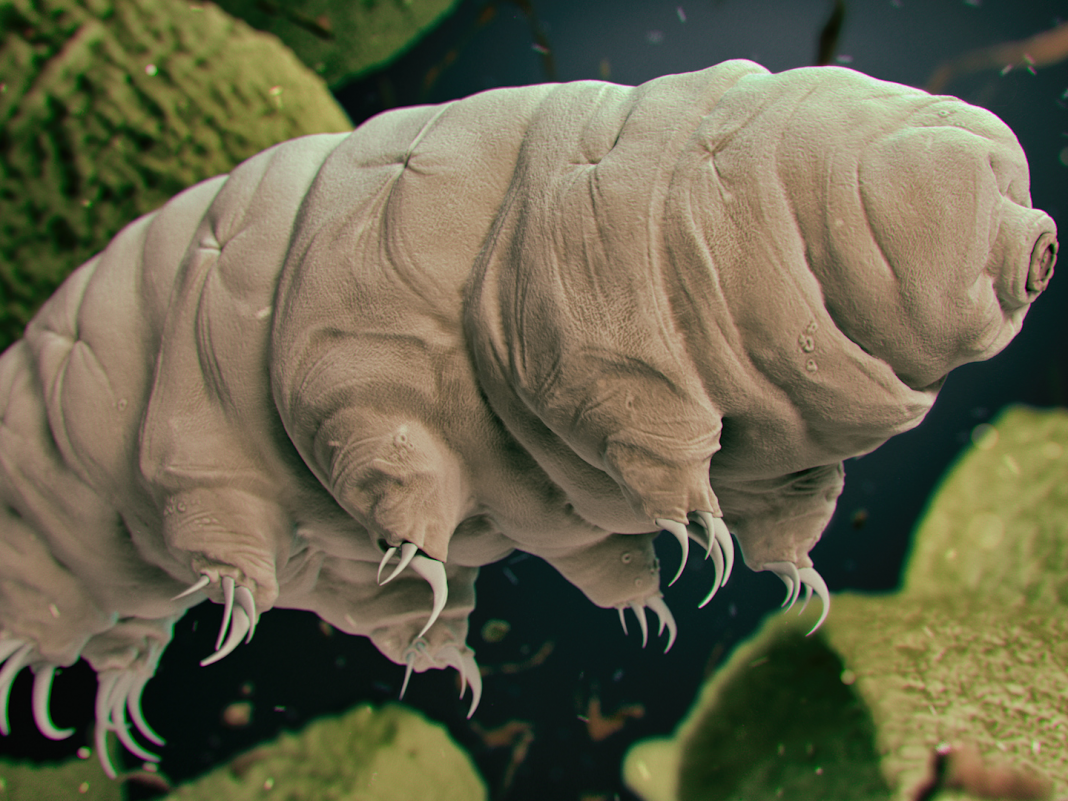 A group of tardigrades crashed into the moon in April. The unbreakable animals might still live.