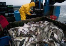 Mercury levels in fish are increasing in spite of decreased emissions