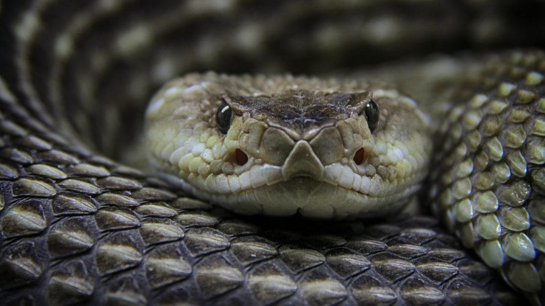 Why Competitors Hasn't Brought Down The High Cost Of Snakebite Treatment