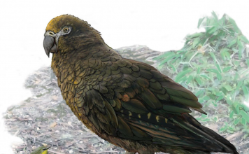 A meat-eating 3-foot-tall parrot that researchers nicknamed 'Squawkzilla' lived over 15 million years back in New Zealand