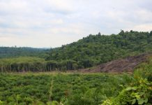 New IPCC report reveals land usage becomes part of option to environment modification