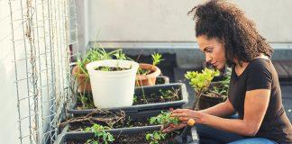 Plants do not have sensations and aren't mindful, a biologist argues