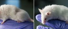 Researchers suggest detecting deepfakes with stunning new instrument: Mice