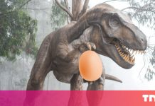 Dinosaur egg gold mine offers crucial ideas about ancient parenting