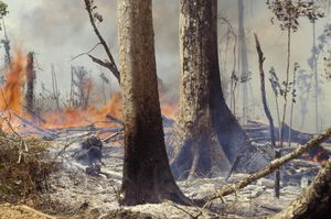 The Amazon rainforest is on fireplace: Trigger, scope, and how one can assist
