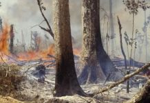 The Amazon rainforest remains to be on fireplace: What's taking place and how one can assist