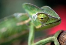 Synthetic skin modifications color like a chameleon, with the aid of nanomachines