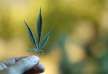 Some CBD extracts are completely legal, DEA validates