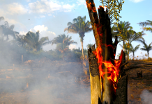 A few of the images celebs are sharing of the Amazon fires were really taken numerous years back, and it reveals a basic issue with social networks