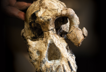 Anthropologists have actually discovered the earliest skull of among our earliest human forefathers. The 3.8 million-year-old fossil modifications our understanding of human history.