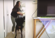 The YouTuber who struck her canine in a video and after that unintentionally published the video footage supposedly will not deal with animal-cruelty charges