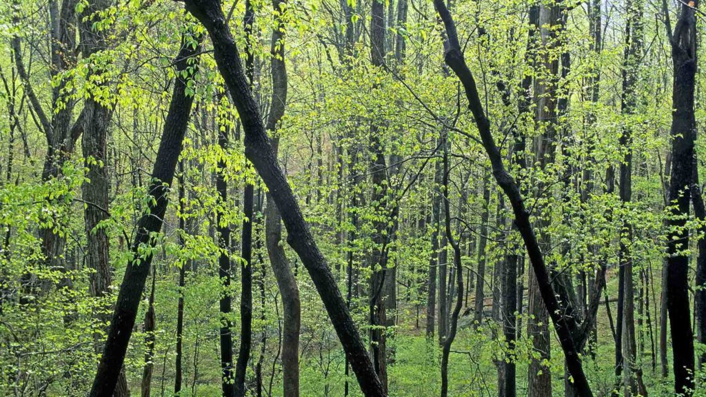 Are We Overstating Just How Much Trees Will Assist Battle Environment Modification?