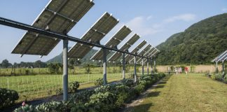 Crops under photovoltaic panels can be a win-win