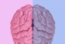 The Misconception of the Male and Female Brain: 5 Concerns for Gina Rippon