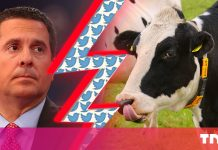 Twitter's rejection to dox a cow stymies Republican politician's $250 M suit