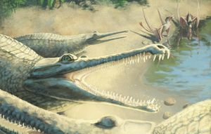 Jurassic crocodile fossil reassessed after years of incorrect identity