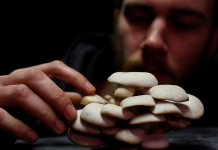 In case of a killer asteroid, volcanic armageddon, or nuclear holocaust, mushrooms might conserve mankind from termination