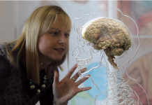 The concept of the male or female brain is a misconception, according to a neuroscientist