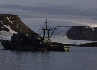 Walrus attacks Russian Navy, sinking inflatable boat