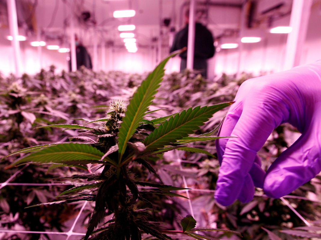 CULTIVATED: Here's who's generating millions on marijuana offers, marijuana legislation passes your home, and more.