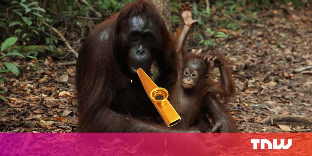 Orangutans can play the kazoo– here's what this informs us about speech development