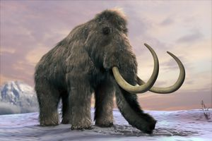 The last woolly mammoths survived on a remote island, research study states