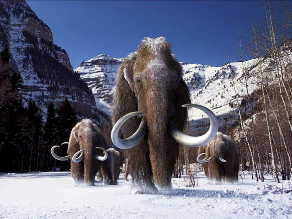 A brand-new research study exposes how the last woolly mammoths passed away out 4,000 years earlier. That seeks the Egyptians had actually developed the pyramids.