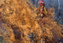Pictures demonstrate how 'fire warriors' are still combating fires in the damaged Amazon Rain forest