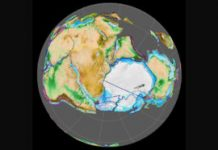 50 years back, an Antarctic fossil indicated Gondwanaland's presence