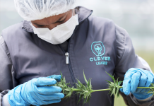 CULTIVATED: MedMen's offer breaks down, Integrated CBD raises financial obligation, and brand-new marijuana headwinds