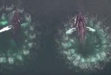 View this wonderful video of whales blowing bubbles to capture supper