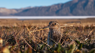 Severe snowfall kept most plants and animals in one Arctic community from replicating