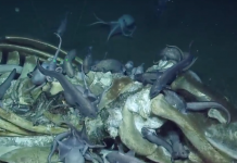 Deep in California's Monterey Bay, researchers caught an undersea 'treasure trove' as octopuses, fish, and worms delighted in a dead whale