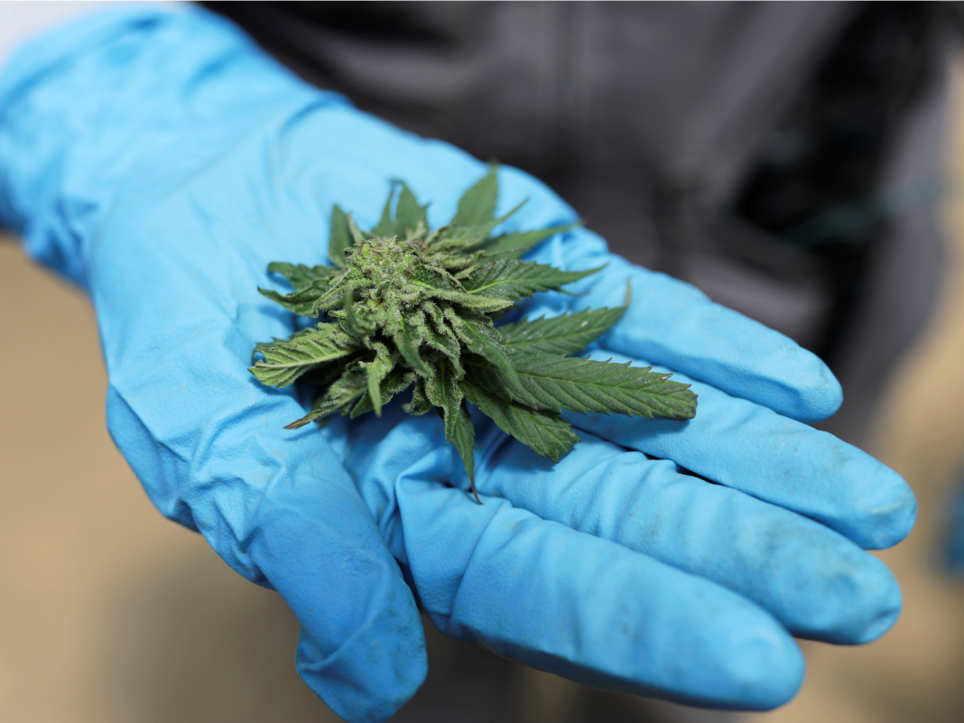 CULTIVATED: How the biggest Wall Street banks are carefully opening their doors to marijuana, food financiers make a bet on CBD, and more
