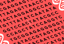 Breakthrough gene modifying software can discover and exchange DNA higher than CRISPR
