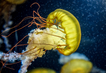 25 sensational images of jellyfish in honor of World Jellyfish Day