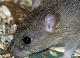 Are you a mouse who can't release worry? Your microbiome may be the issue