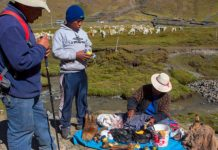 The hereditary basis of Peruvians' capability to live at high elevation