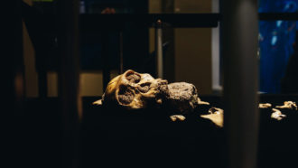 A Dallas museum hosts uncommon hominid fossils from South Africa
