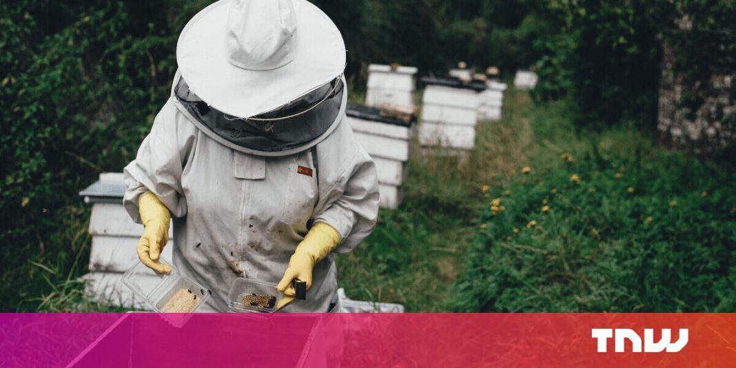 Honey bees are passing away– however manufactured hives might conserve them