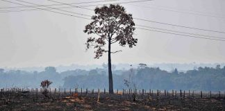 As Tropical Rain Forests Disappear, So Do Possible Medication Reservoirs