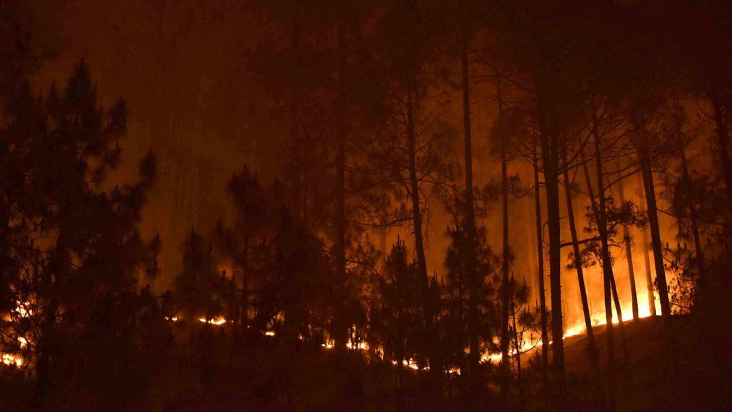 Ep. 41: In India, Misguided Policies Leave Forests Ablaze