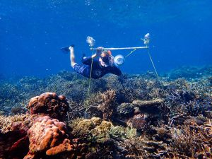 Underwater loudspeakers could help restore damaged coral reefs