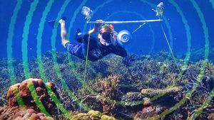 A new tool in the fight to save coral reefs: Sound video