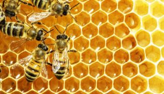 A biochemist's extraction of data from honey honors her beekeeper father