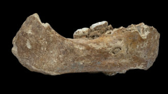Mysterious Denisovans emerged from the shadows in 2019